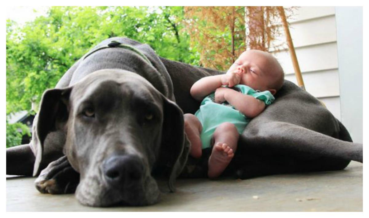 какую собаку лучше выбрать