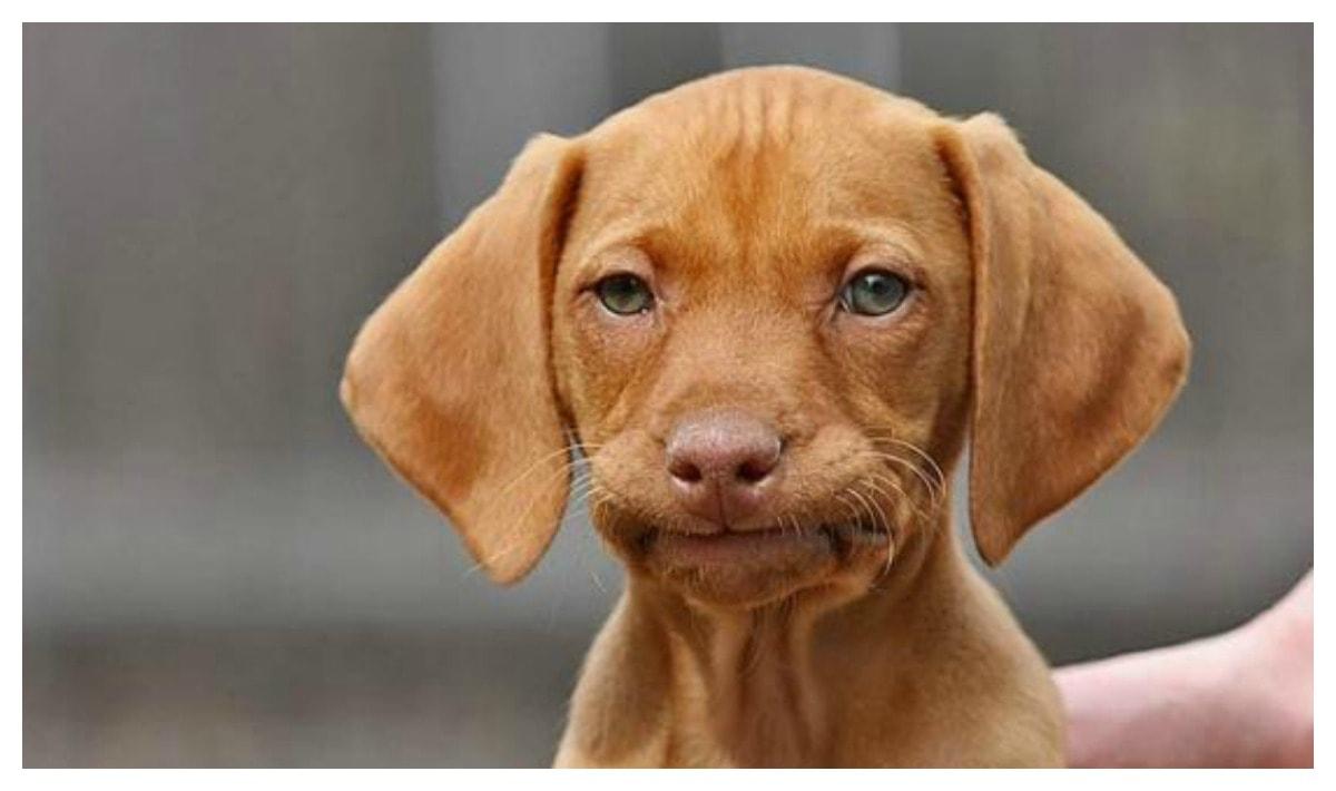 очень смешные собаки фото