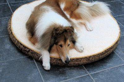 диета для больной собаки