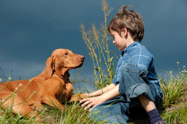 самые ласковые породы собак